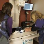 x-ray on cat
